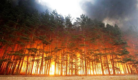 elite-daily-russia-forest-fire1