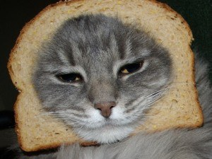 I don't have a picture for this, and I don't really want to think about it too much. Let's all look at this picture of a cat with bread around its face instead.